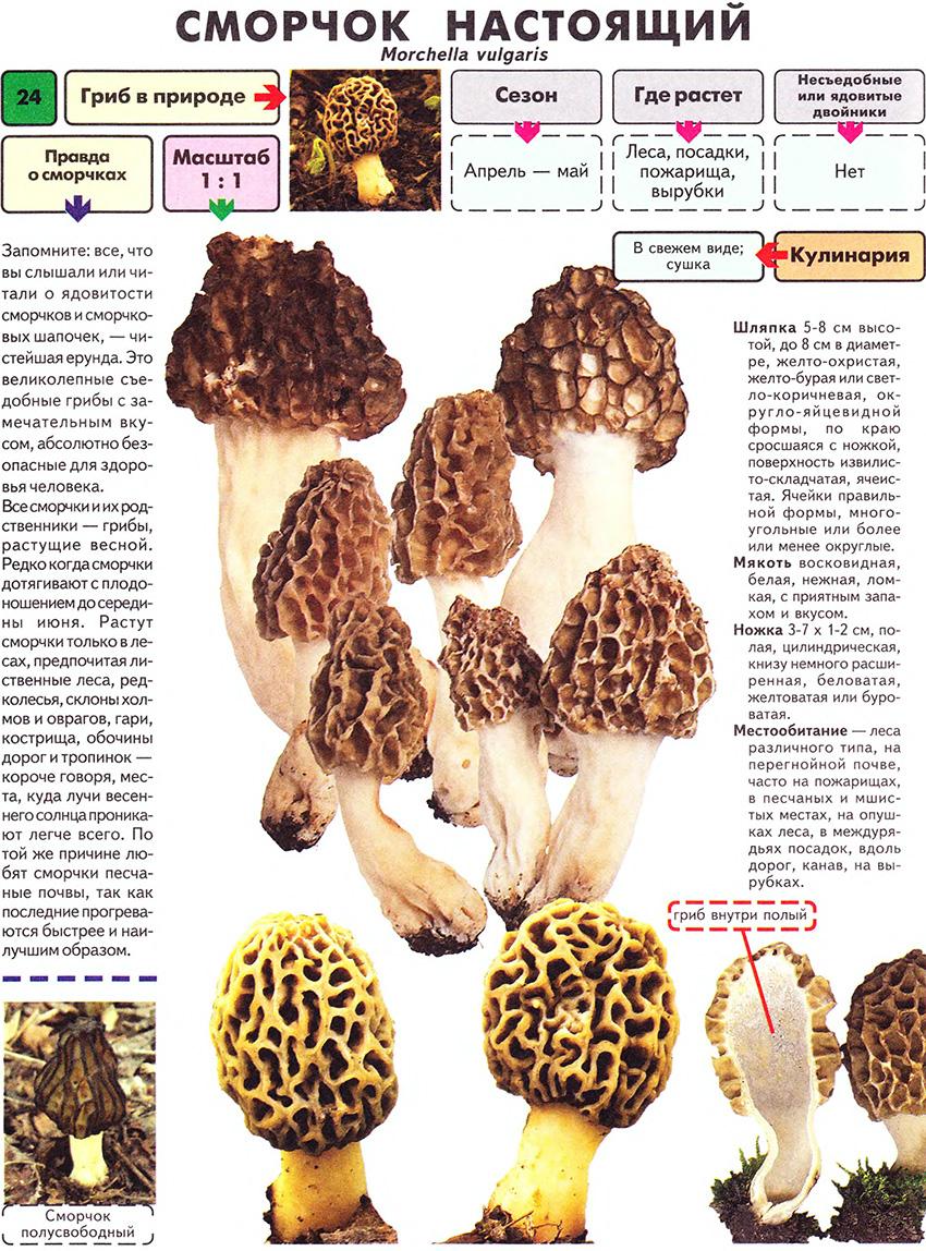 как готовить матрешки грибы