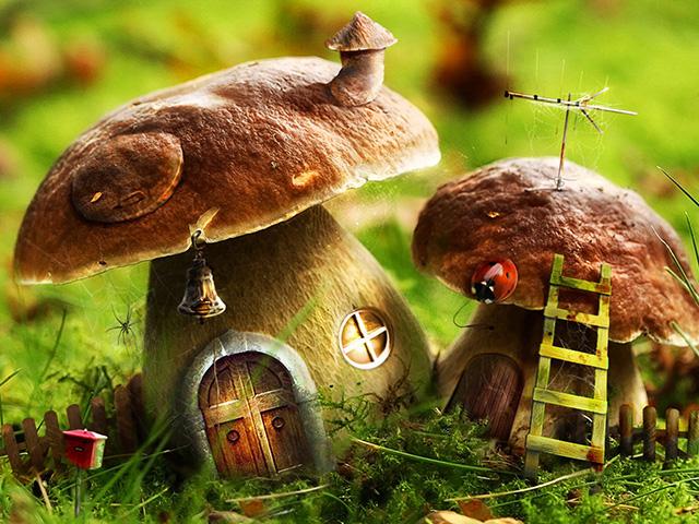 Книги о грибах скачать торрент