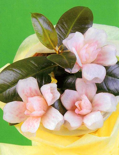 http://supercook.ru/images-curving/carv-flowers-15-a.jpg