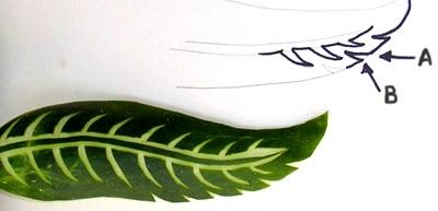 تعلمي تزيين الخضر بالصور ogurec-l-05.jpg