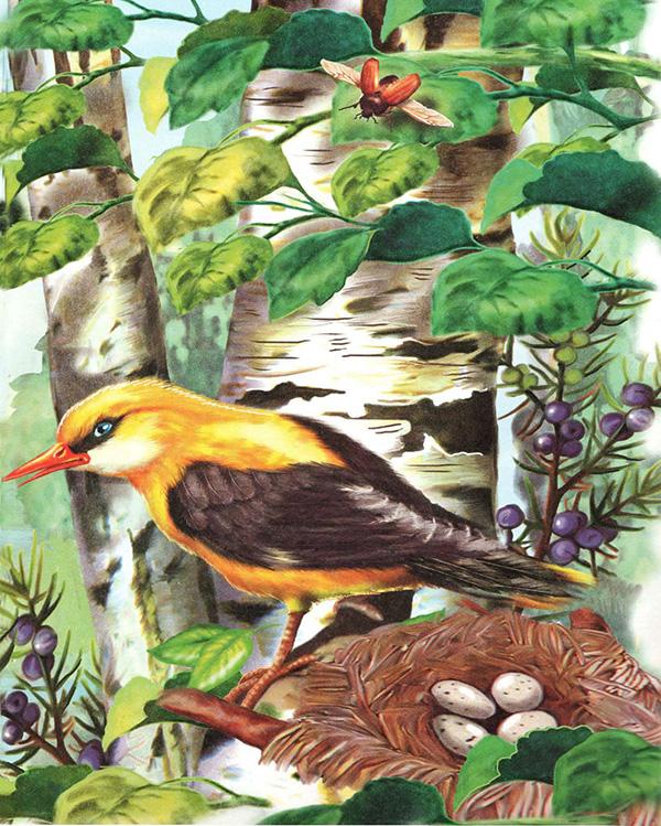 Бианки лесные домишки скачать книгу бесплатно