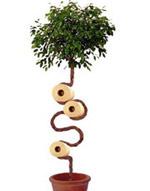Применение арборскульптурам можно найти где угодно (фото с сайта arborsmith.com).