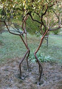 Пляшущие человечки. Интересно, в каких монстров они превратятся, когда дерево вырастет через несколько лет (фото с сайта growingvillage.com).