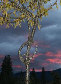 """Символ мира (""""пацифика"""", проще говоря). По словам арборскульптора Ричарда Римса, это самая странная скульптура, из тех, что ему когда-либо заказывали (фото с сайта arborsmith.com)."""