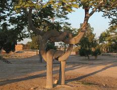 Живые деревья завязаны узлами в затерянном цирке
