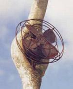 Арборскульптуру Лэдд понимает в крайне постмодернистском ключе (фото с сайта danladd.com).