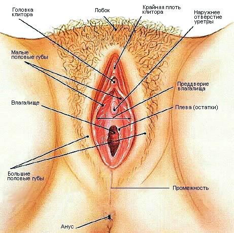 Женский половой орган на фото 4 фотография