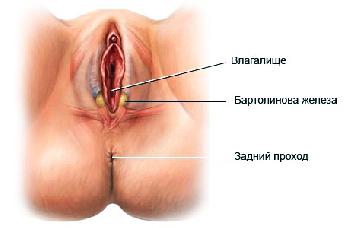 Женский половой орган на фото 6 фотография