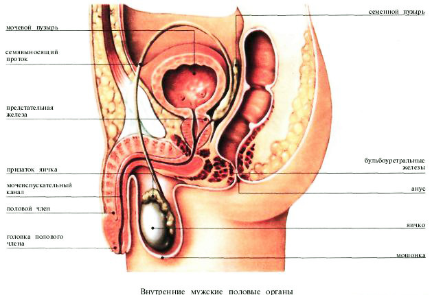 Красивые половые органы у женщин фото фото 341-135