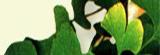 "Запеканочка ""На острове Буяне"" – кулинарный рецепт"